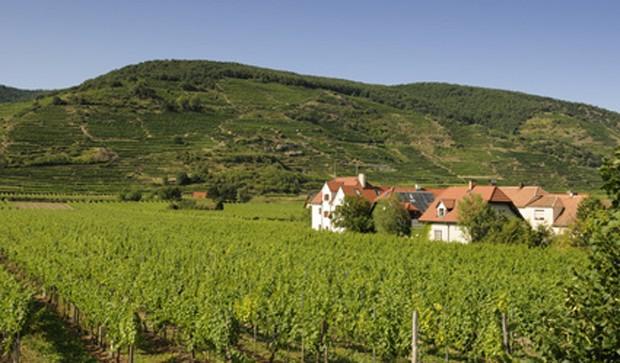 Weinregion Wagram