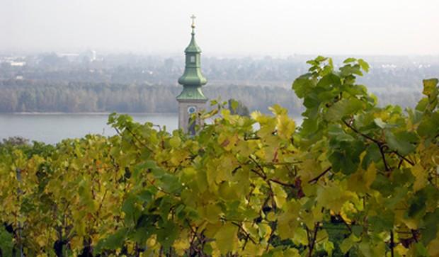 Weinregion Wien