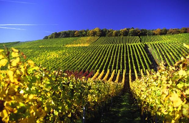 Weinland Deutschland
