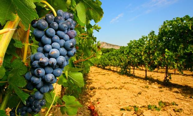 Weinland Frankreich