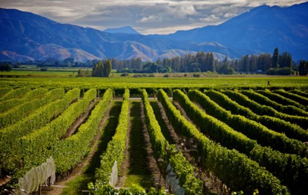 Weinland Neuseeland