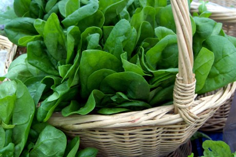 spinat-der-gruene-alleskoenner.jpg