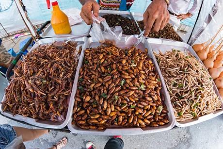 insekten-im-naehrstoffvergleich.jpg