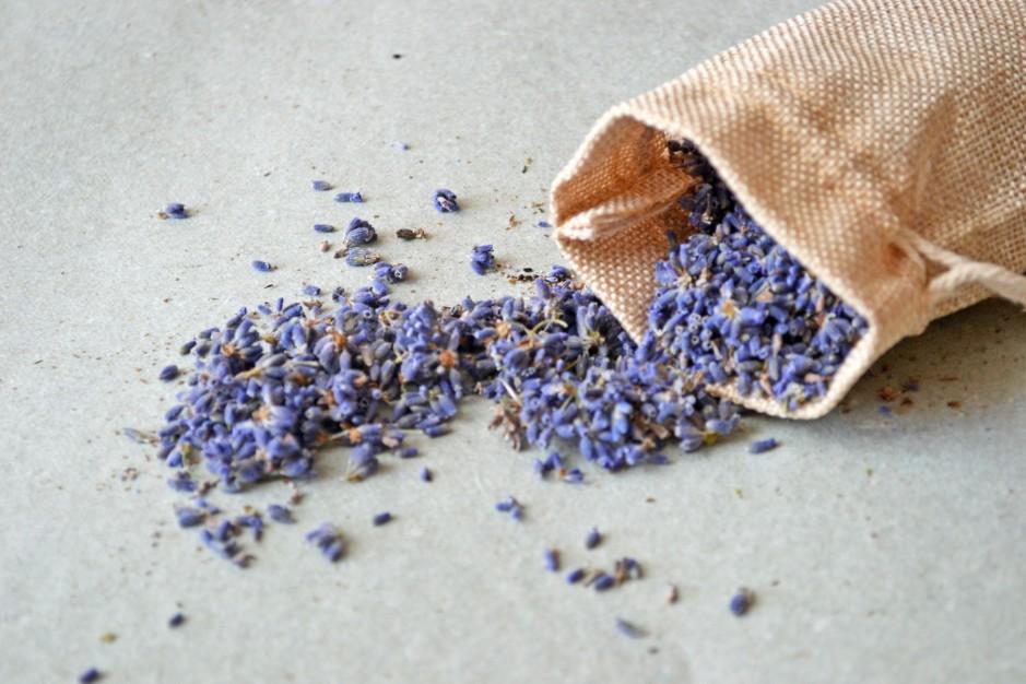 TOP Lavendel Rezepte