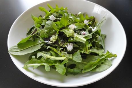 loewenzahn-salat-mit-kuerbiskernoel-dressing.png