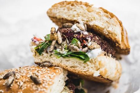 heuschrecken-burger.jpg