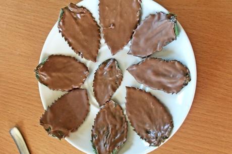 minze-mit-schokolade.png